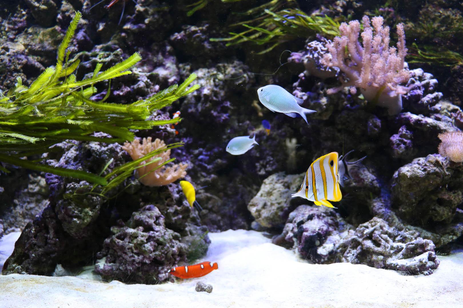 Obiekt Akwarium