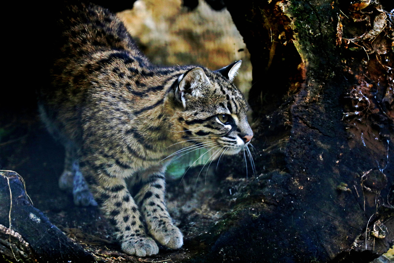 Obiekt Zwiedzanie zoo od 20 marca
