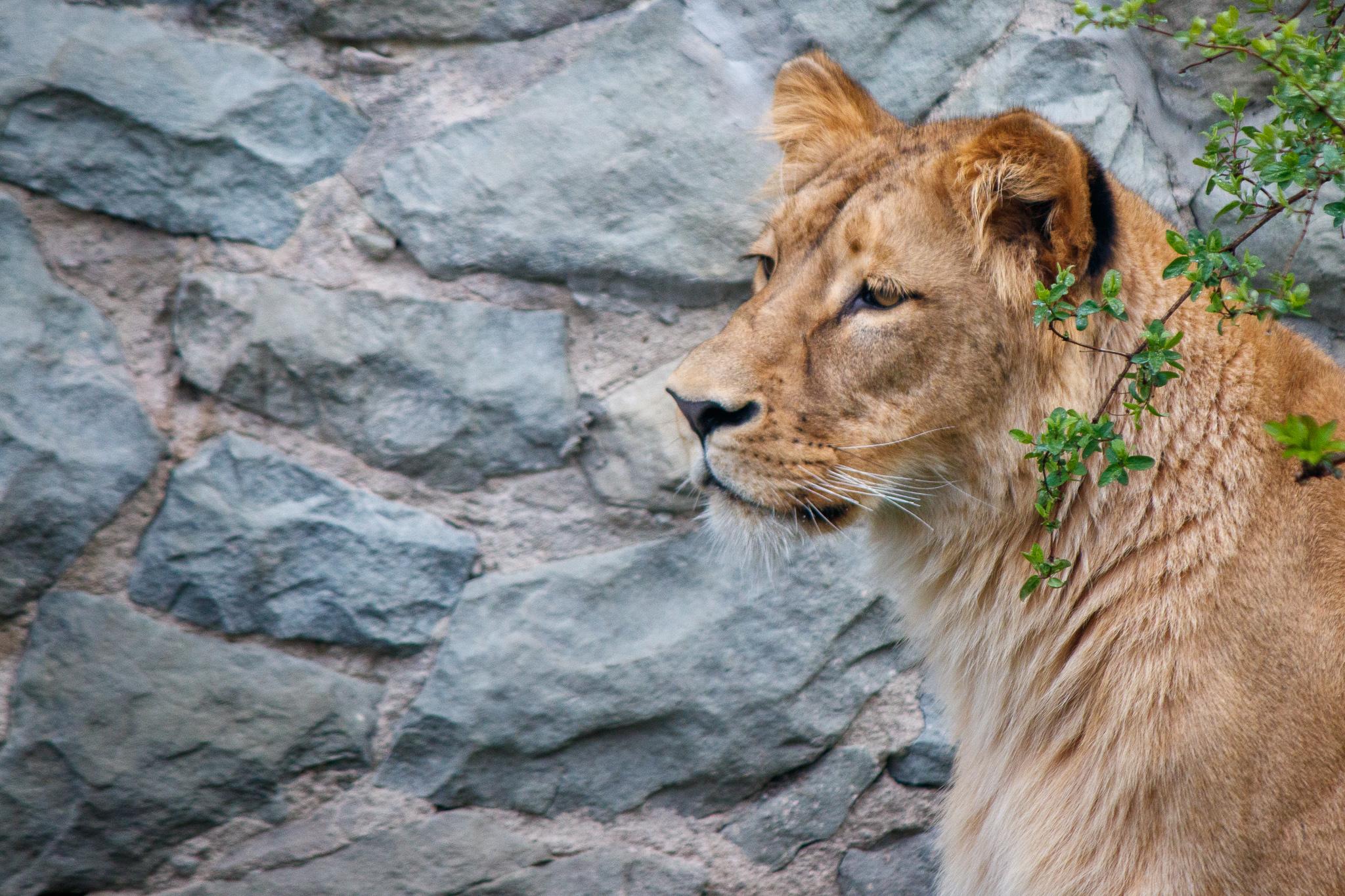 Obiekt Anoona - nowa mieszkanka Śląskiego Zoo